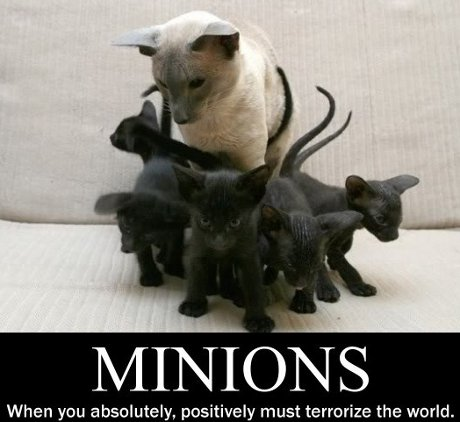 minions: when you absolutely must terrorize the world (big Siamese with several small black kittens)