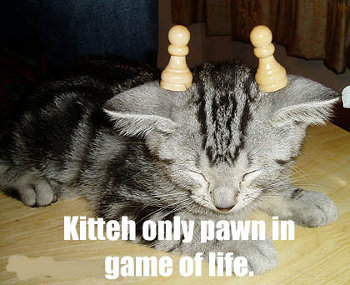 Kitty only pawn in game of life