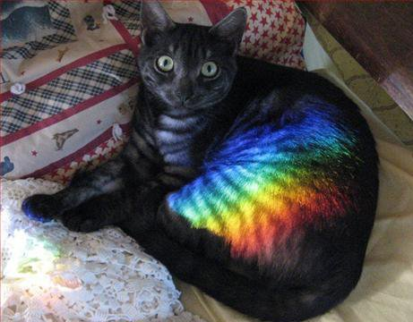 cat with rainbow pattern on its fur