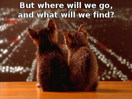cats looking out over a city with the caption 'But where will we go, and what will we find?'