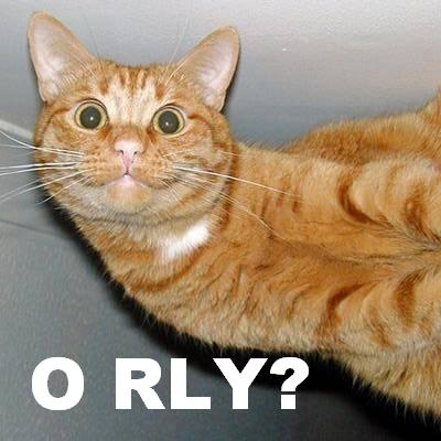 cat saying 'O RLY?'