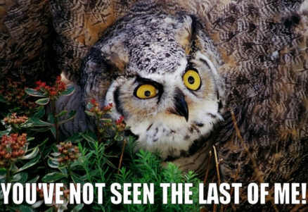 owl saying 'you've not seen the last of me!'