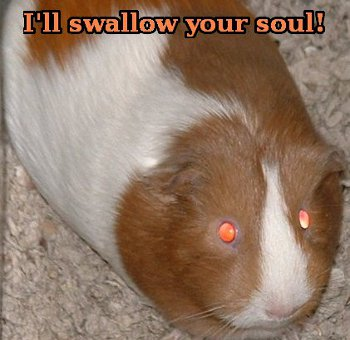 Guinea pig saying 'I'll swallow your soul!'