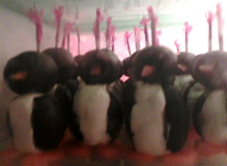 army of small cream cheese penguins
