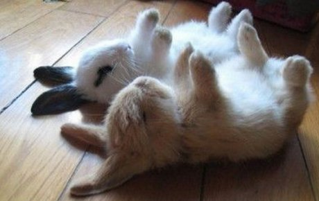 young bunnies lying on the floor with their paws up
