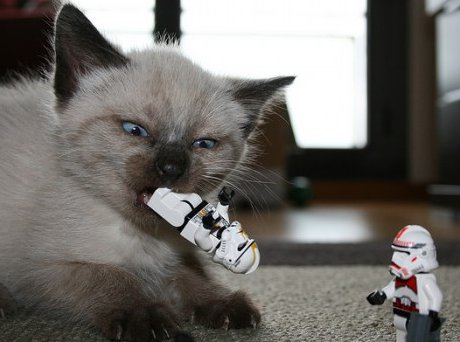 cat playing with Lego stormtrooper figures