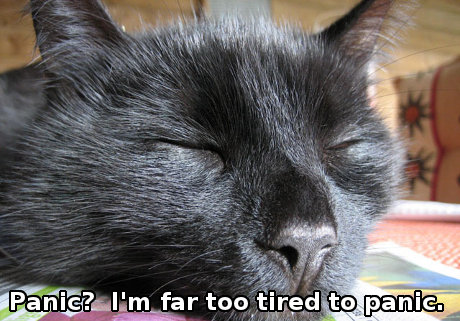 Very sleepy cat with caption 'Panic? I'm too tired to panic.'