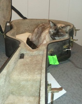 Dane's cat sitting in a guitar case