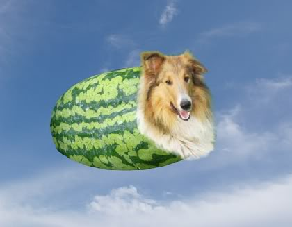 watermelon with a collie in it, melon-collie ~= melancholy, silly pun