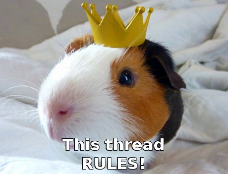 guinea pig with crown, caption 'this thread rules!'