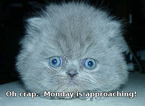 scared kitten, captioned 'Oh crap, Monday is approaching.'