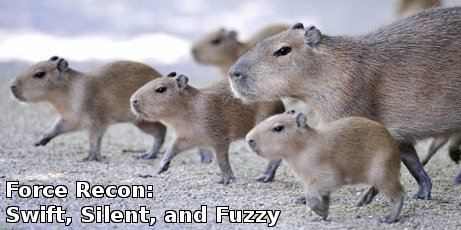 capybaras fanning out, captioned 'swift, silent, fuzzy'