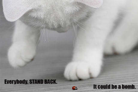 cat looking at ladybug, caption 'everybody stand back, it could be a bomb'