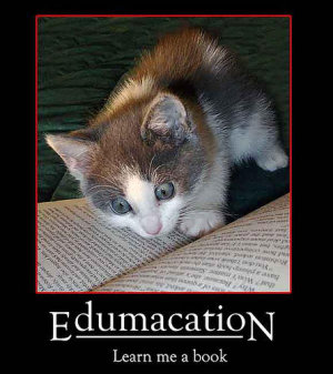 cat, staring intently at a book, caption 'edumacation: learn me a book'