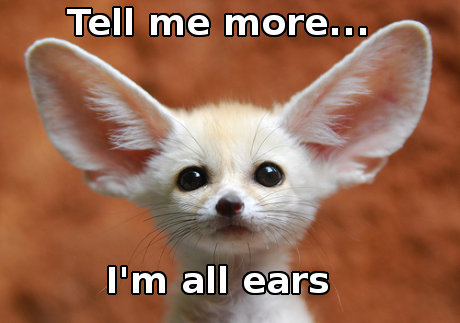 fennec foxes, caption 'tell me more, I'm all ears'