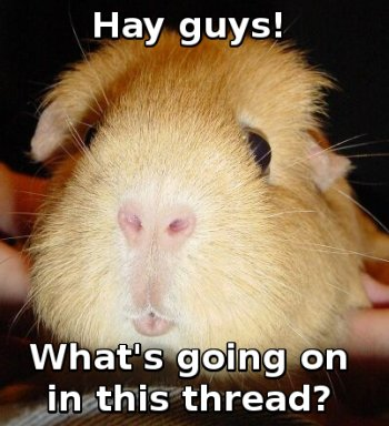Guinea pig: Hay guys! What's going on in this thread?